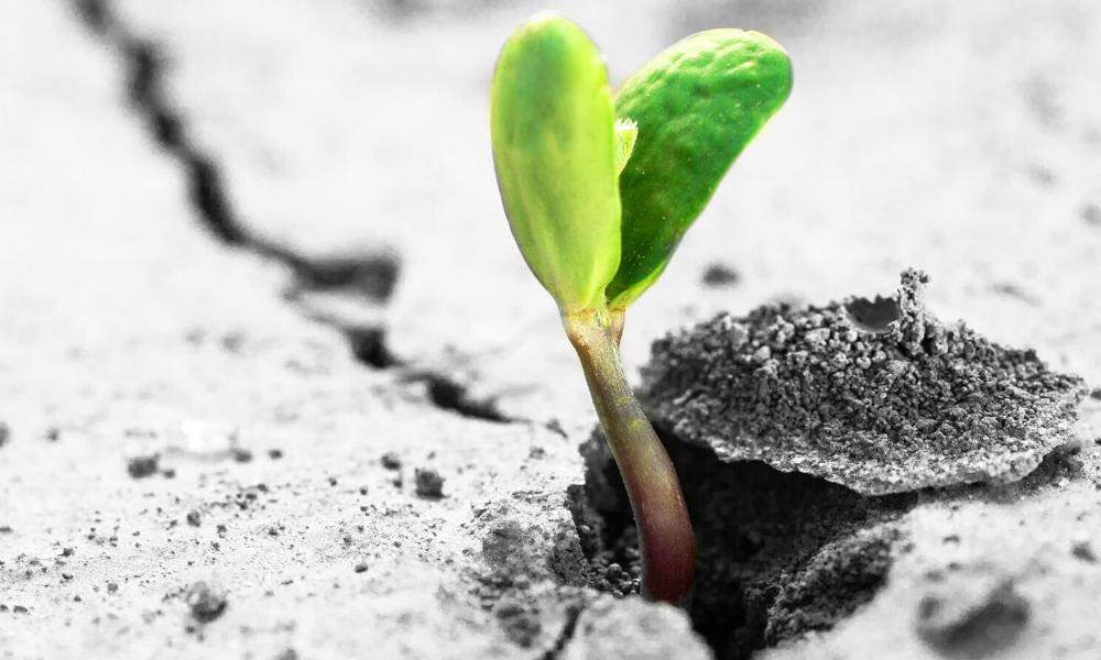 sprouting through
